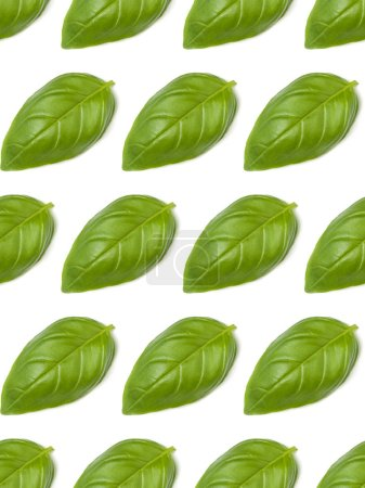 Photo for Sweet Basil herb leaves isolated on white background closeup. Flat lay, top view. Seamless pattern. - Royalty Free Image