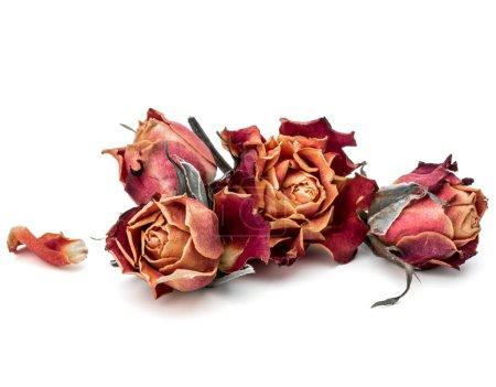 Photo pour Rose séchée tête de fleur isolé sur fond blanc découpe - image libre de droit