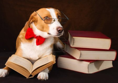 Photo pour Mignon chien de race mixte se faisant passer pour un intellectuel - image libre de droit