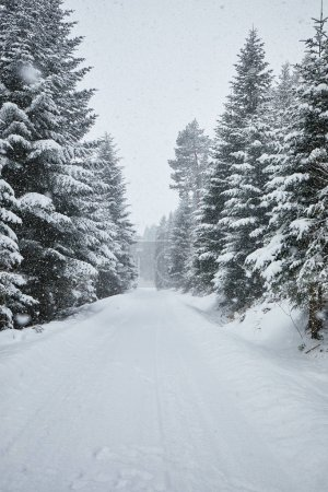 Photo for Winter trees in mountains covered with fresh snow - Royalty Free Image