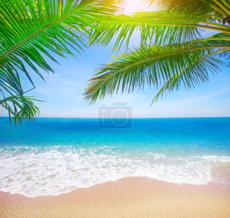 tropical beach with coconut palm branches