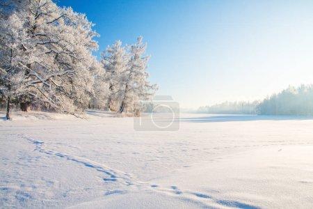 Foto de Parque de invierno. Vista panorámica de la naturaleza de panorama - Imagen libre de derechos
