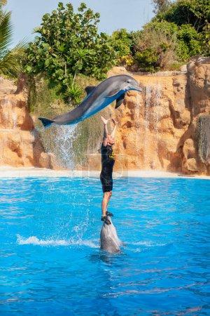 Photo pour PUERTO DE LA CRUZ, TENERIFE, SPAIN - JANUARY 30, 2012: Show with a trainer and dolphins in the pool at the Loro Park (Loro Parque) - image libre de droit