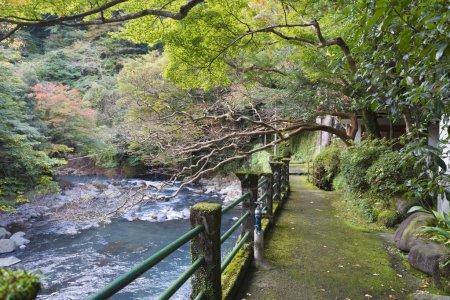 Photo pour Berge de la rivière japonaise en mousse - image libre de droit