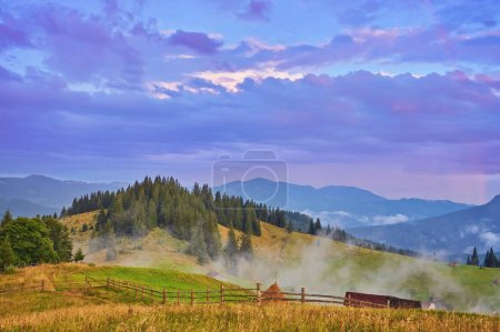 Photo for Landscape with fog in mountains and rows of trees in morning - Royalty Free Image