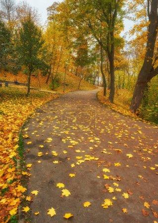 Photo pour Couleurs d'automne rouges et colorées dans la forêt avec une route et du soleil à l'automne - image libre de droit