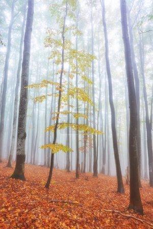 Photo pour Paysage d'automne en bois brumeux avec une piste - image libre de droit