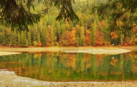 Photo for Forest of colorful autumn trees reflecting in calm lake - Royalty Free Image