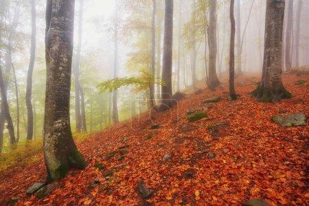Photo pour Sentier forestier dans les montagnes par une journée d'automne brumeuse . - image libre de droit