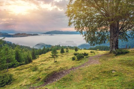Photo for Beautiful summer landscape in the mountains. Sunrise - Royalty Free Image
