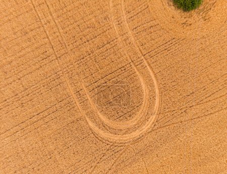 Photo for Aerial view of wheat field with tractor tracks. Beautiful agricultural texture or background of summer agriculture landscape. Farm from drone view. - Royalty Free Image
