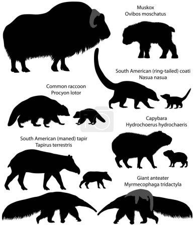 Illustration pour Collection d'animaux avec des oursons vivant sur le territoire de l'Amérique du Nord et du Sud, en silhouettes : boeuf musqué, raton laveur commun, tapir sud-américain, fourmilier géant, capybara, coati sud-américain - image libre de droit