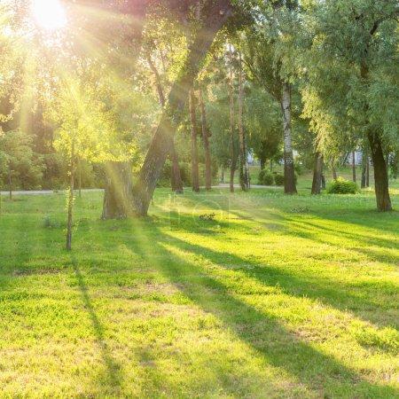 Photo pour Beau parc ensoleillé avec des faisceaux de lumière à l'herbe verte - image libre de droit