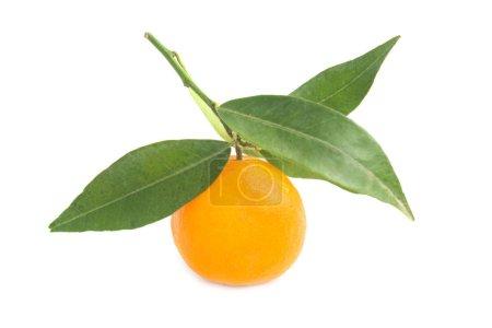 Photo pour Mandarin orange avec des feuilles vert isolé sur fond blanc - image libre de droit