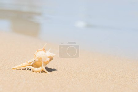 Photo for White sea shell on sand beach. Closeup view, can be used as summer vacation background - Royalty Free Image