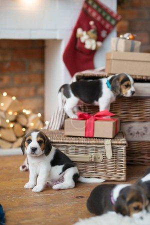 cute puppies in basket