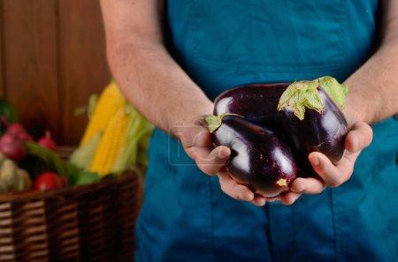 Farmer holding fresh organic eggplants in hands.