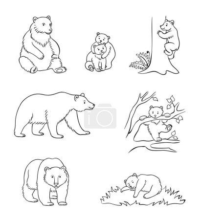 Illustration pour Ours bruns dans les contours - udults et oursons. Illustration vectorielle. PSE8 - image libre de droit