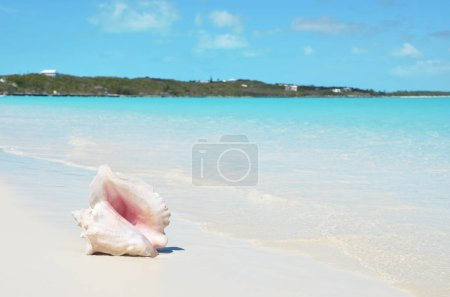 sea shell on sandy beach with blue ocean water of Exuma, Bahamas