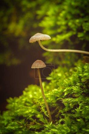 Photo pour Belle photo de près d'un petit champignon - image libre de droit
