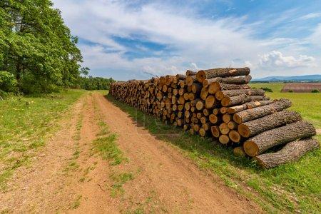 Photo pour Gros tas de bois dans une forêt de chêne - image libre de droit
