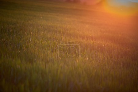 Photo for Amazing sunset light over the meadow - Royalty Free Image