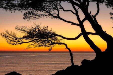 Foto de Color hermoso amanecer sobre la costera en una Costa Brava con la silueta del árbol de pino - Imagen libre de derechos