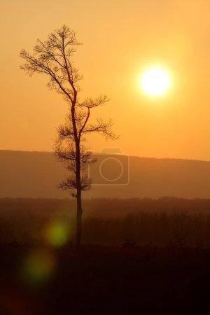 Photo pour Beau coucher de soleil lumière et arbres silhouette - image libre de droit
