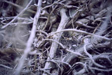 dry grey branches of plant, autumn concept