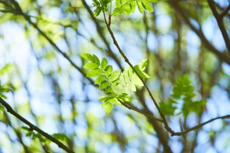 Photo for Trees branches with green leaves at sunny day, spring concept - Royalty Free Image