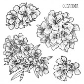 Decorative oleander flowers set design elements Can be used for cards invitations banners posters print design Floral background in line art style