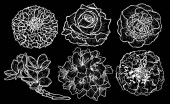 Decorative  flowers set design elements Can be used for cards invitations banners posters print design Floral background in line art style