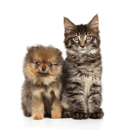 Puppy and kitten together on white background. Baby animal theme