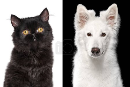 Portrait of a black Cat and white Dog.