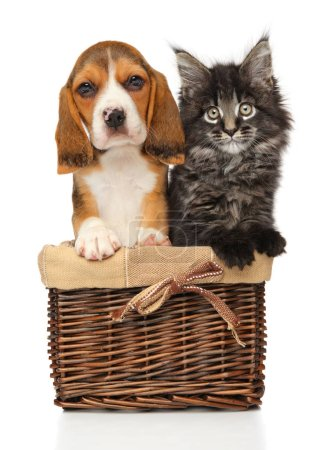 Kitten and puppy together in wicker basket on a white background