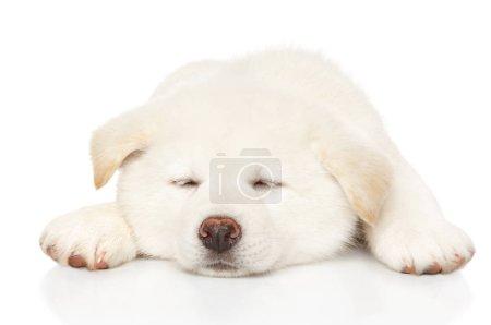 japanische akita inu Welpen schlafen vor weißem Hintergrund. Baby-Tier-Thema