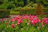 """Постер, картина, фотообои """"Красивый розовый цветок в парке в городе Мальме"""""""