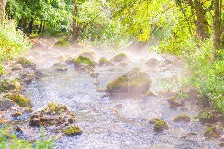 Photo pour Paysage forestier Stream au matin d'été, soleil léger à travers l'arbre branches - image libre de droit