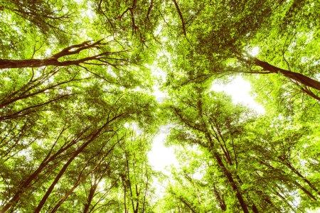 Photo pour Printemps forêt verte, vue vers le haut, beau paysage naturel . - image libre de droit
