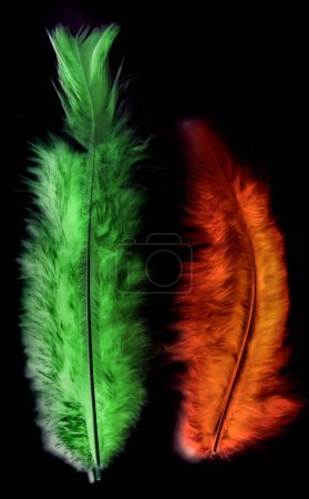 bird feathers multicolored on white background