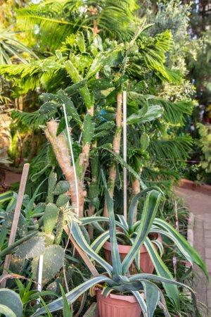 Photo pour Planter dans un pot dans un jardin botanique - image libre de droit