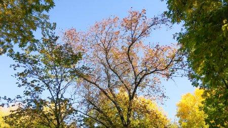 Photo pour Feuilles d'arbres vue d'en bas dans le ciel, paysage d'automne - image libre de droit
