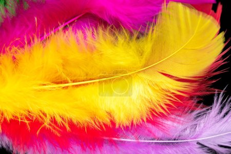 Photo for Bright colored feathers close-up as a background - Royalty Free Image