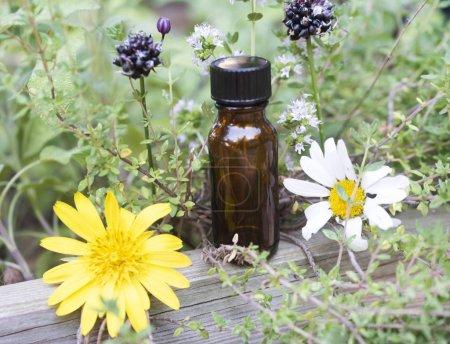 Photo pour Image des huiles essentielles et des plantes de plein air - image libre de droit