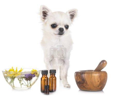 Photo pour Chien et huiles essentielles devant fond blanc - image libre de droit