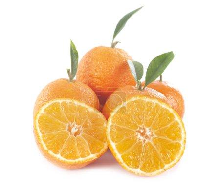 Photo pour Oranges fruits devant fond blanc - image libre de droit