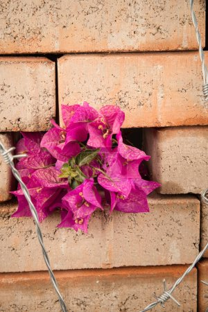 Photo for Close-up view of wall by red bricks and pink flowers - Royalty Free Image