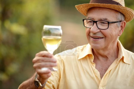 Winegrower in winery vineyard tasting white win...