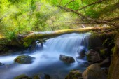 Waterfall on Cold Spring Creek along Tamanawas Falls Trail at Mount Hood National Forest in Oregon