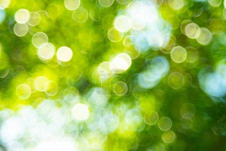 grünes Bokeh aus dem Fokus Hintergrund aus der Natur